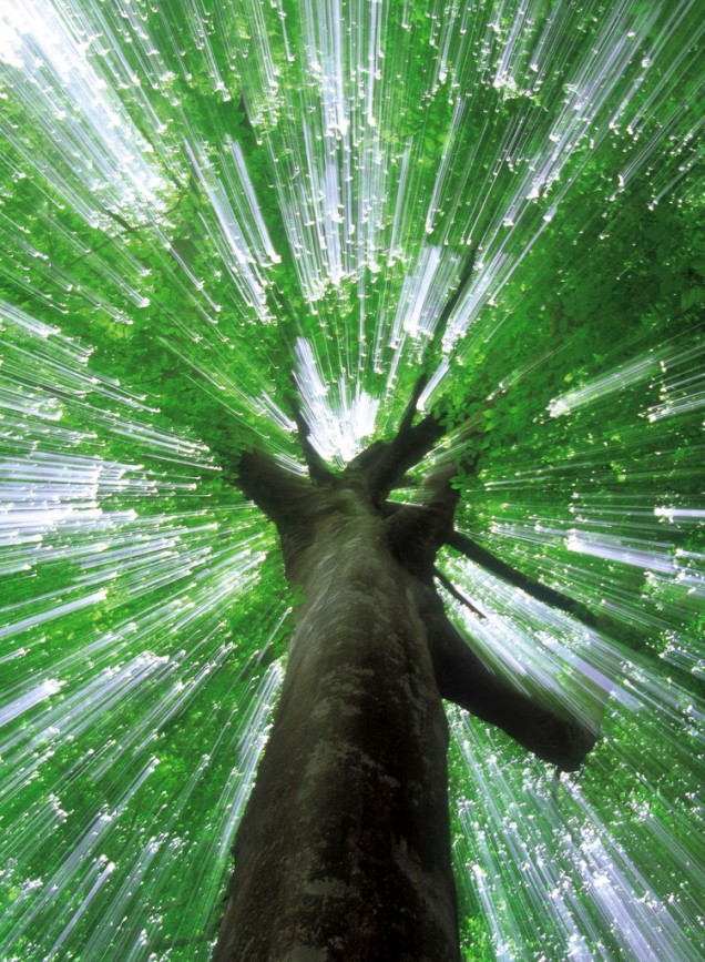 Light Streaming Through the Crown of a Tree
